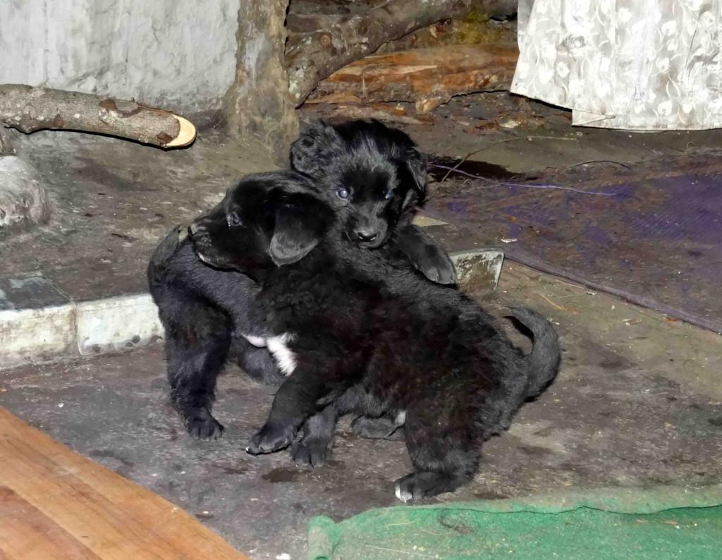 puppies travel