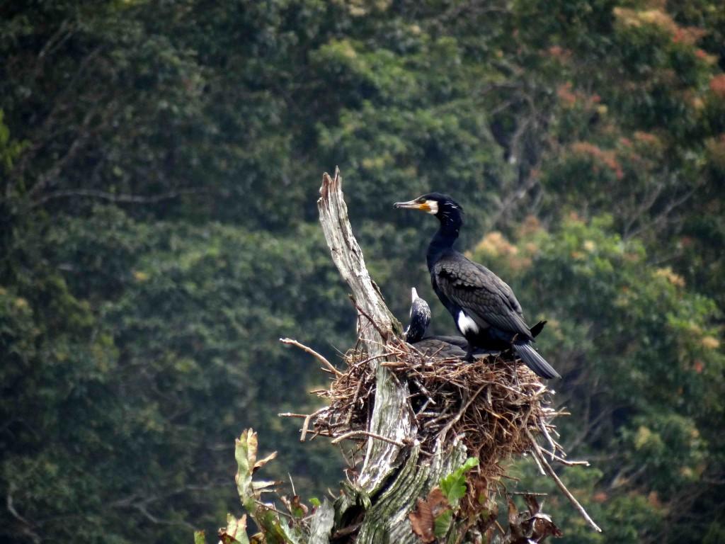 Periyar Tiger Reserve,Thekkady,Kerala,India,birds,animals,flora,fauna