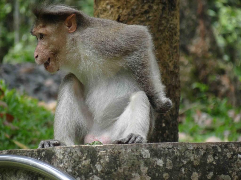 Periyar Tiger Reserve,animals,Kerala,Thekkady,India
