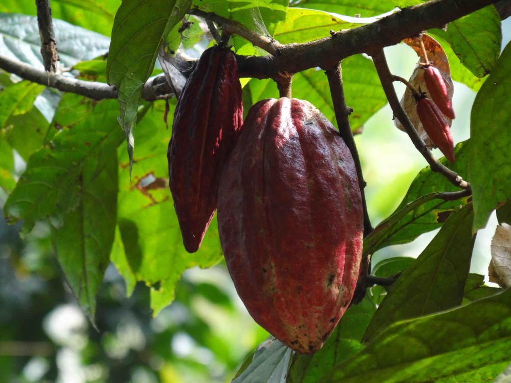 Spice garden,munnar,thekkady,Kerala,India