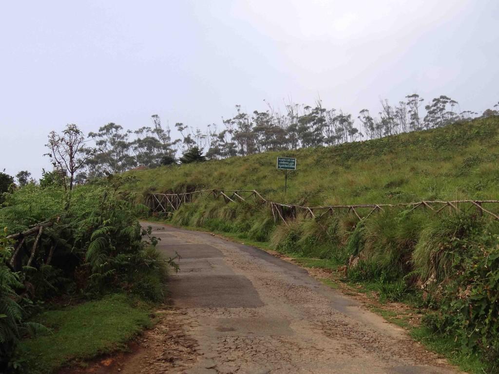 Eravikulam National park,Munnar,Kerala,India,sanctuary