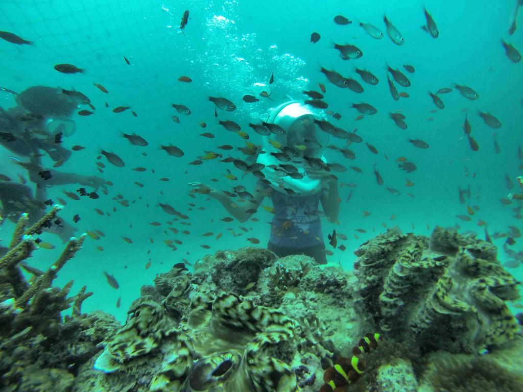 Andaman Island,India,Asia,beaches,sea walk,north bay,fishes,aquatic life