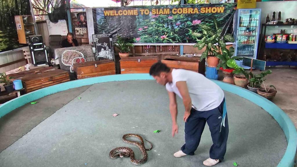 snake park,chalong,thailand,phuket