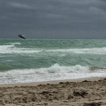 Hello Miami