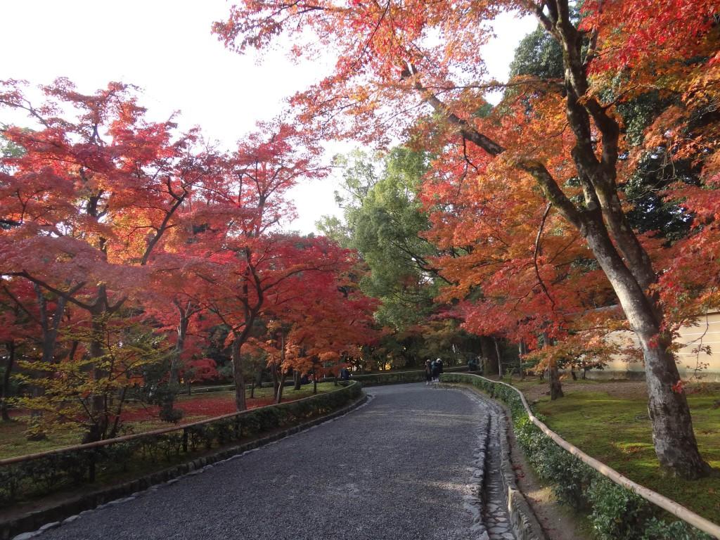 Kyoto,Shinjukuji temple,Japan,fall colours