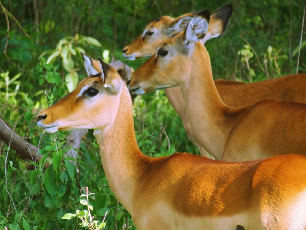 Kenya,Africa,Masai Mara,Amboseli,Nakuru,wildlife